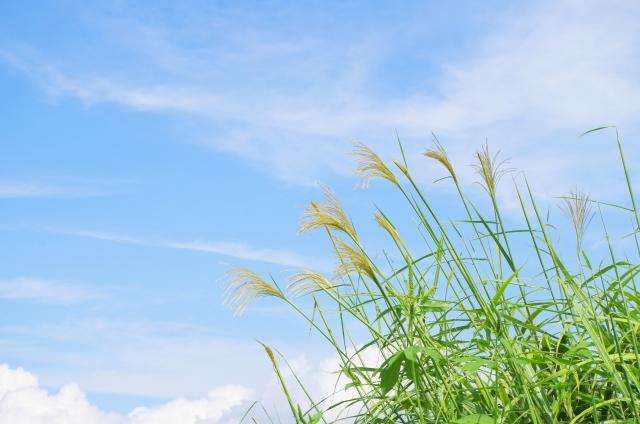 11/1 ヨガ&瞑想 @駒沢公園そば