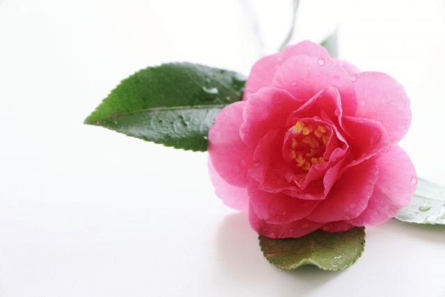 12/27 ヨガ&瞑想 @駒沢公園そば