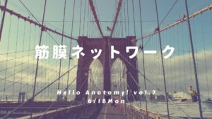 6/18 筋膜を徹底解剖・Hello Anatomy!vol.7