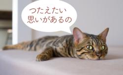 【ご感想UP】ペットさんからのメッセージ(アニマルコミュニケーション)