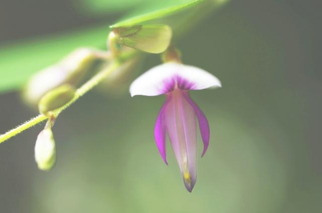 【満席】 10/11 駒沢公園ヨガ&瞑想クラス