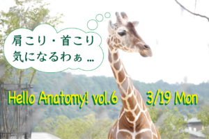3/19 開催 Hello Anatomy! vol.6<肩こり・首こり>