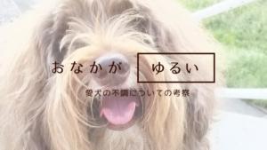 犬と不調と消化とアーユルヴェーダ