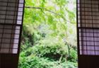 <北鎌倉>5/28・ヨガクラスと瞑想クラス募集中
