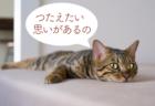【新メニュー】ペットさんからのメッセージ(アニマルコミュニケーション)