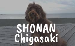 犬とお出かけ・湘南 茅ヶ崎エリア